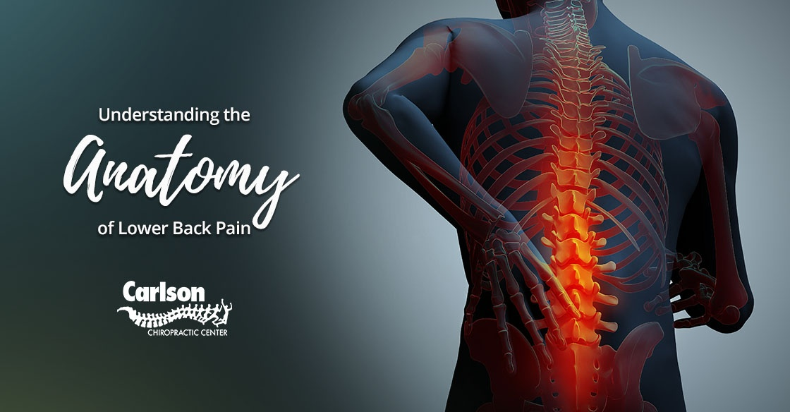 Understanding the Anatomy of Lower Back Pain